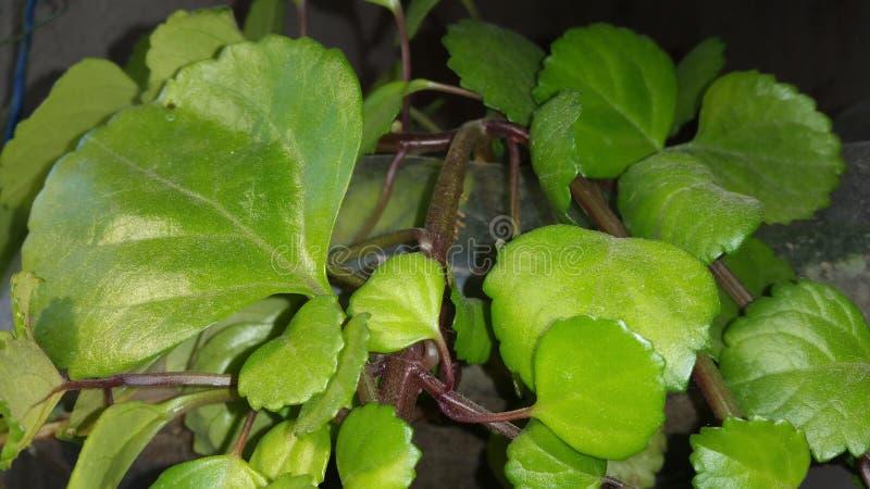 Växter i flaskan arkivbilder