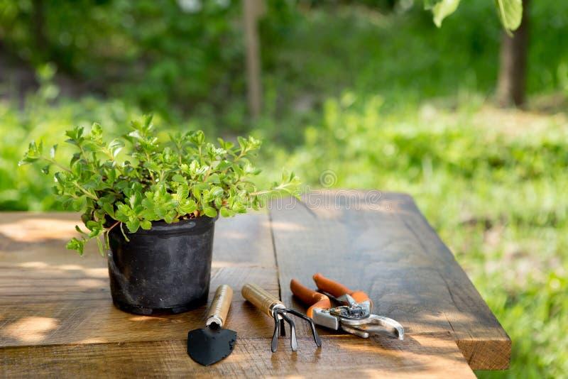 Växter i kruka och trädgårdhjälpmedel på trätabellen, grön trädbakgrund som arbeta i trädgården begrepp royaltyfri fotografi