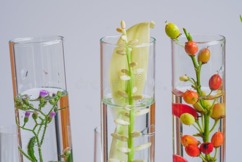 växter i provröret för bioteknikmedicinforskning arkivfoton