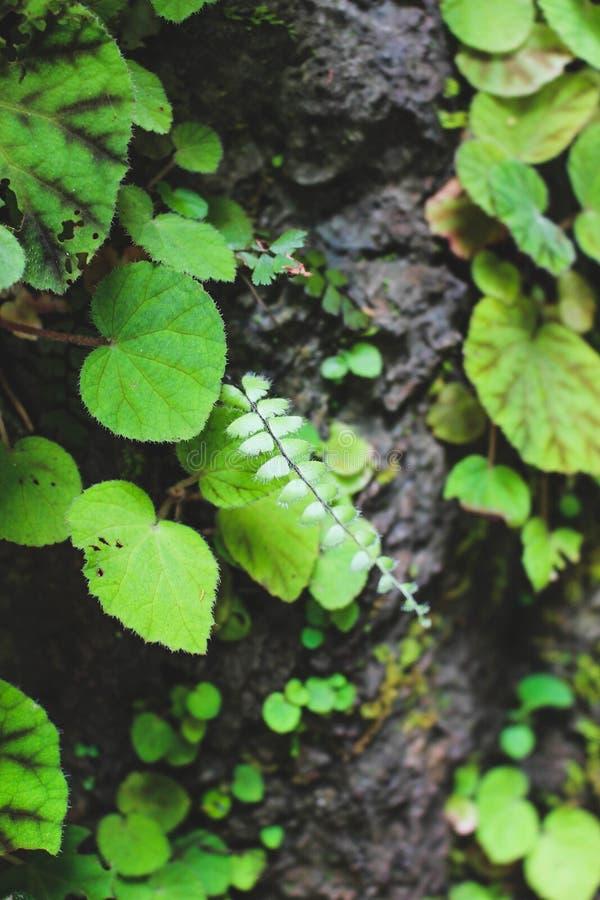 Växter i skogen royaltyfri foto