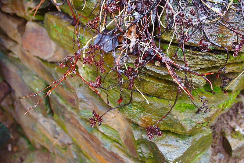 Växter i snow arkivbild