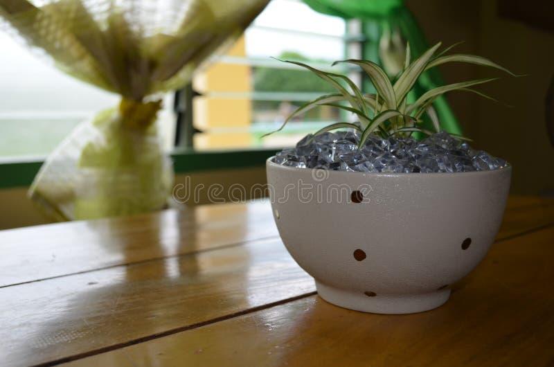 Växter i vas 3 royaltyfria foton