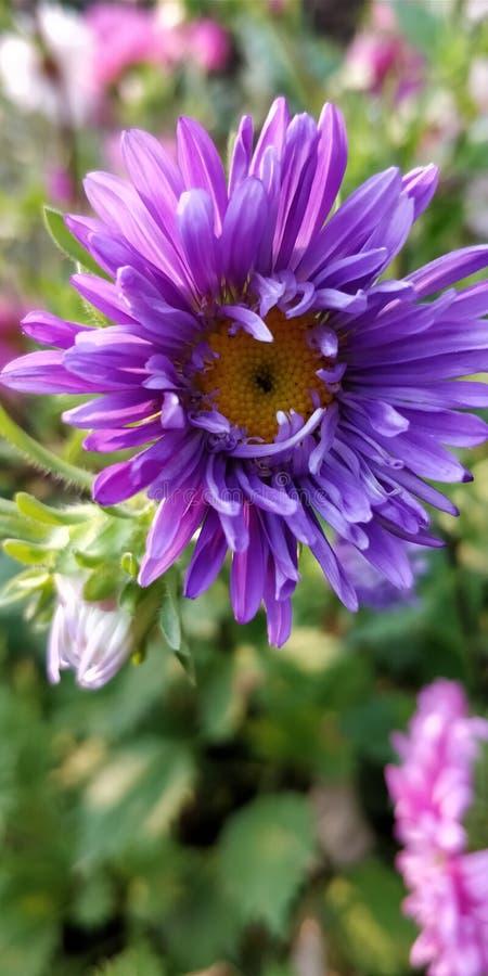 Växter och blommor arkivfoton