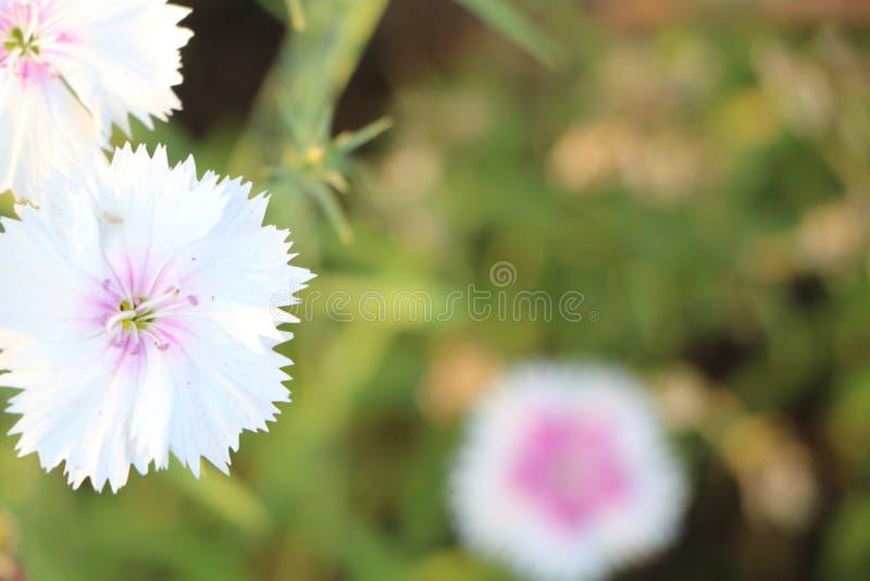 Växter och blommor royaltyfria foton