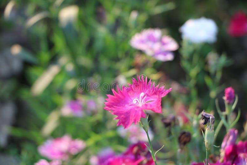 Växter och blommor arkivfoto
