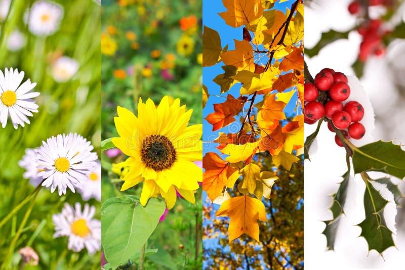 Växter och blommor i våren, sommar, höst, vinter, fotocollage, begrepp för fyra säsonger arkivfoto