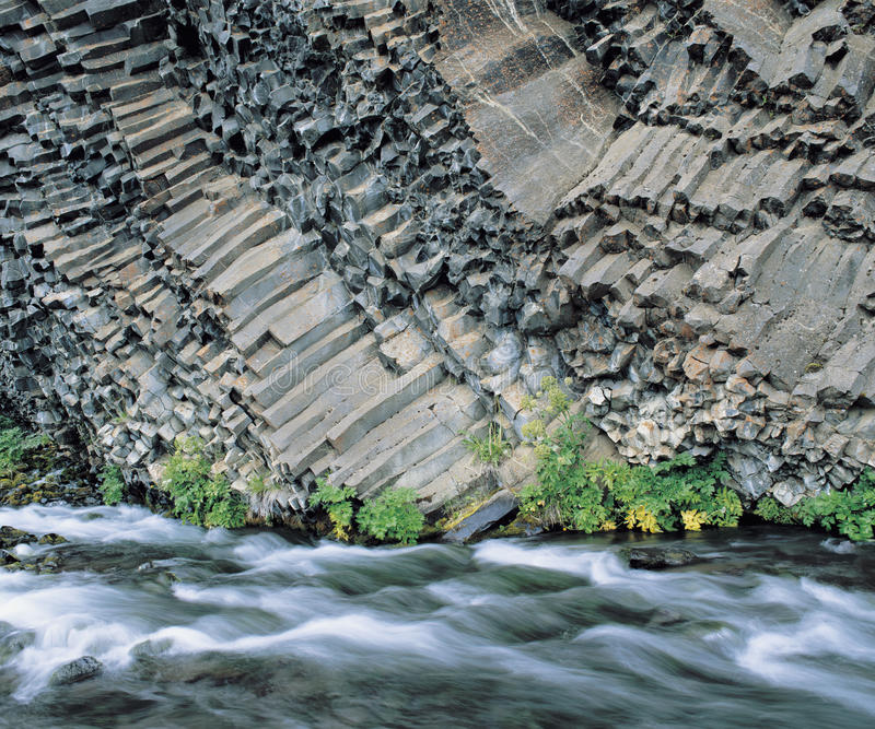 Växter och flod på grunden av den columnar basaltklippan royaltyfria foton