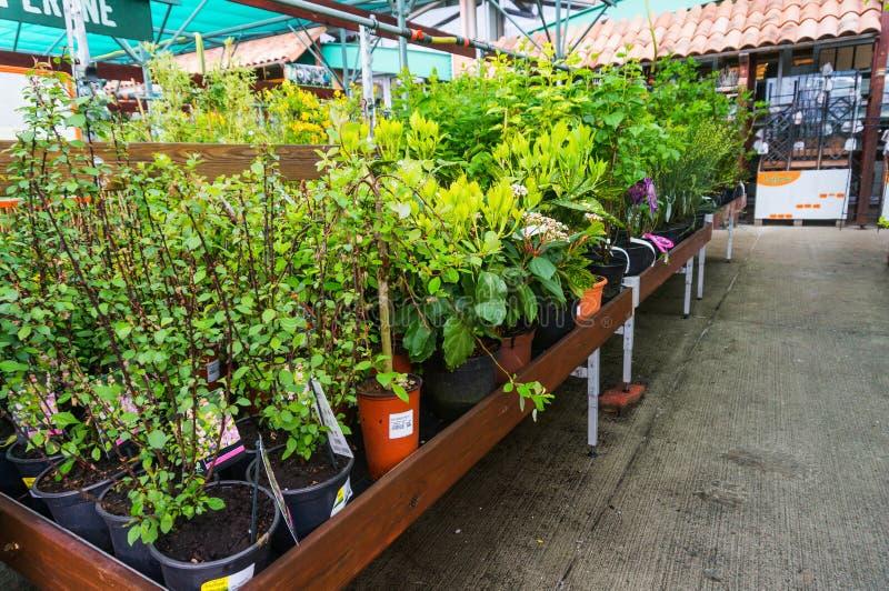 Växter och trädungt träd royaltyfri bild