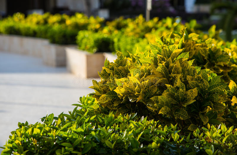 Växter på den tropiska semesterorten royaltyfri foto