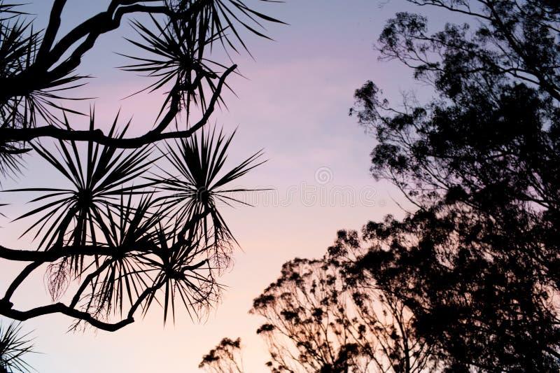 Växter på himlen av Long Beach, Kalifornien Kalifornien är bekant med en goda som lokaliseras huruvida i Förenta staterna arkivbild