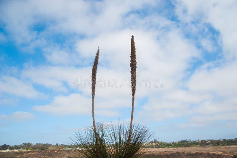 Växter på himlen av Long Beach, Kalifornien Kalifornien är bekant med en goda som lokaliseras huruvida i Förenta staterna I somma royaltyfria foton