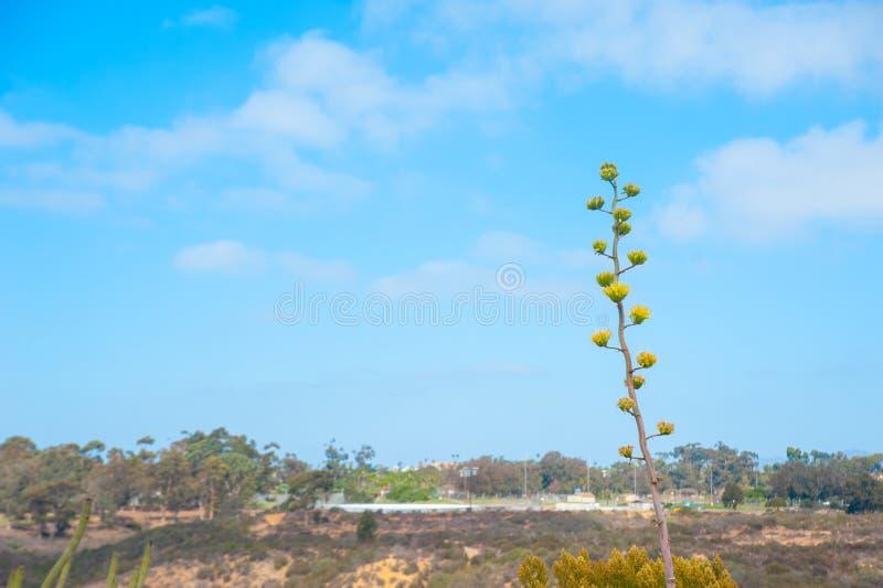Växter på himlen av Long Beach, Kalifornien Kalifornien är bekant med en goda som lokaliseras huruvida i Förenta staterna I somma arkivbild