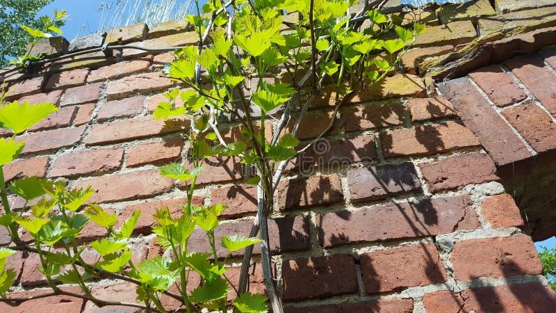 Växter på väggen royaltyfri foto