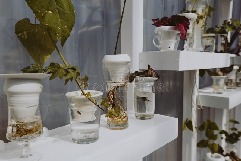 Växter på vita hyllor i en burk arkivfoton