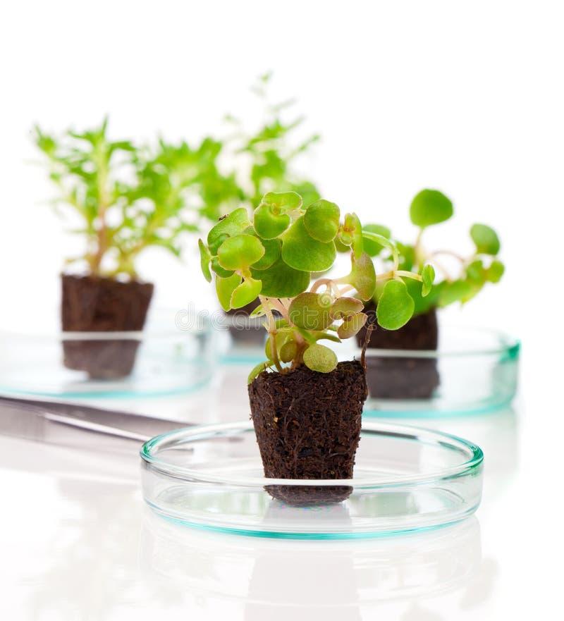 Växter plantor royaltyfria foton