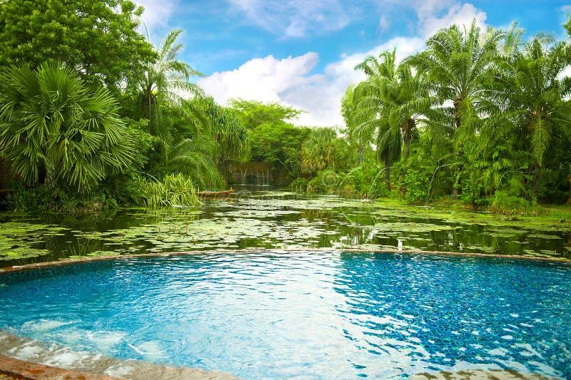 växter pool omgivet simma som är tropiskt arkivfoto