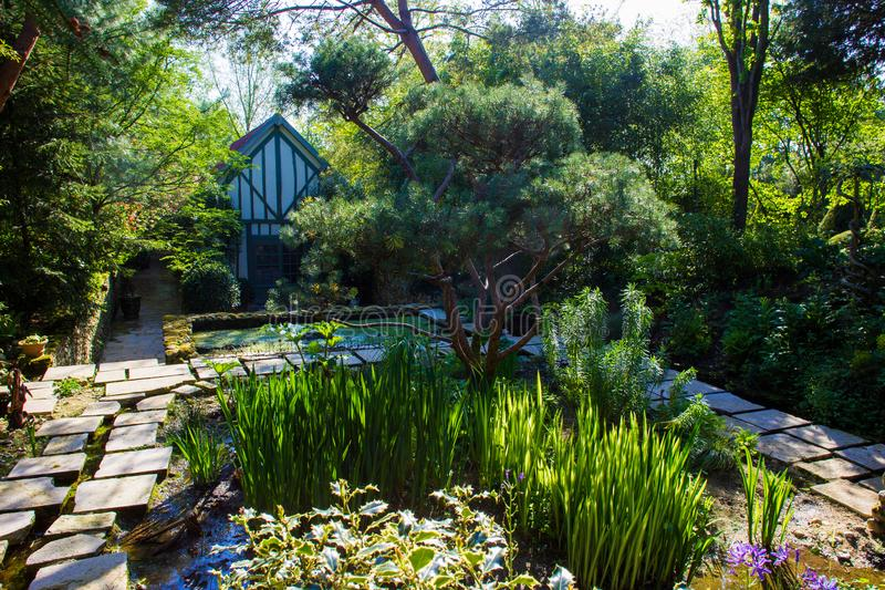Växter som älskar vatten royaltyfria foton