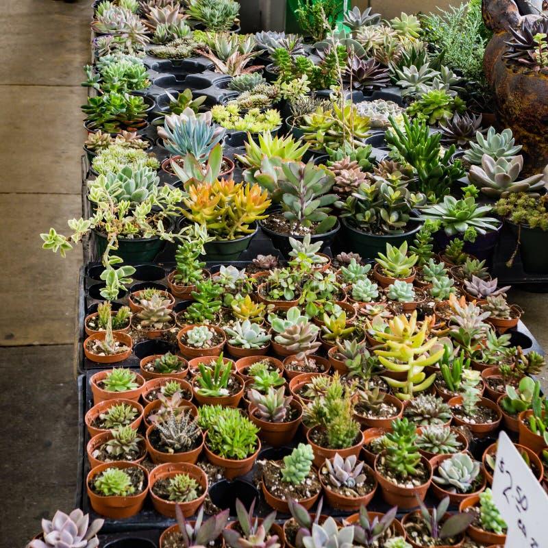 Växter som är till salu på en bondemarknad arkivfoto
