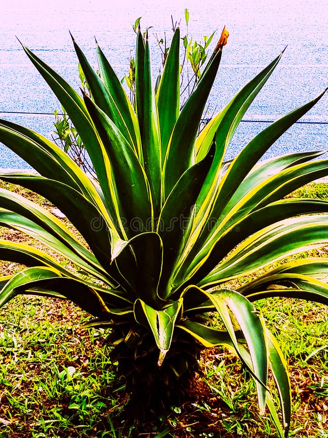 Växter som finns endast i Indonesien royaltyfri fotografi
