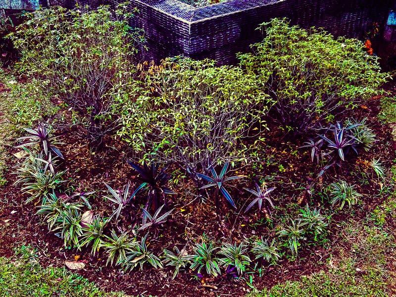 Växter som finns endast i Indonesien royaltyfri bild
