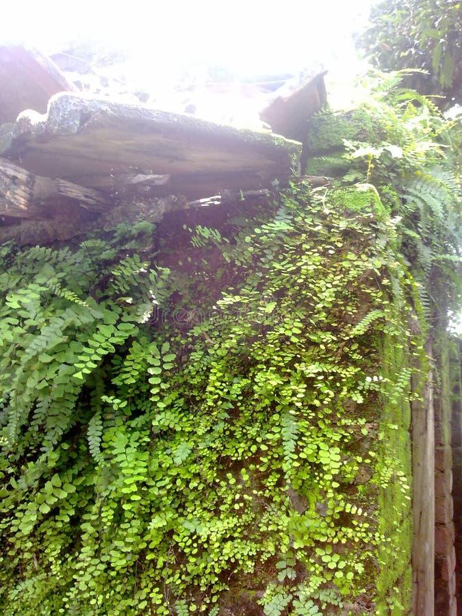Växter som växer på hus royaltyfri fotografi