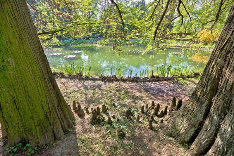 Växter, träd och sjö av den Zagreb botaniska trädgården arkivfoton