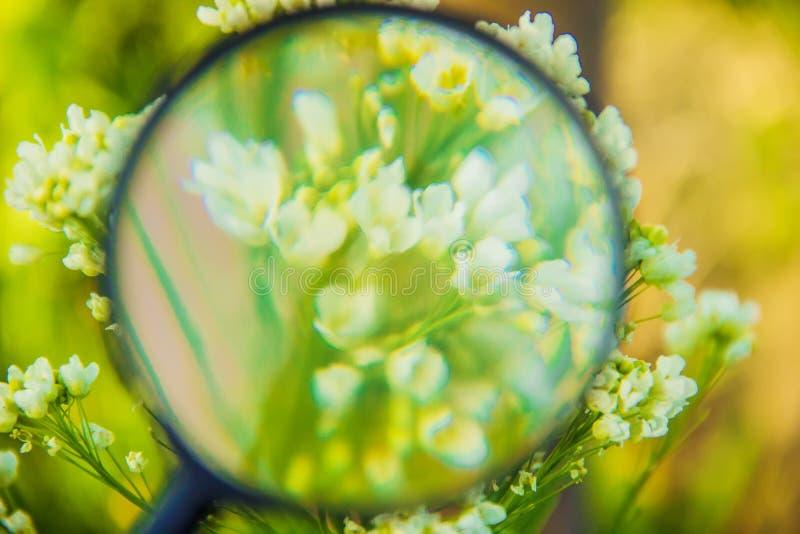 Växter under förstoringsglaset increase fotografering för bildbyråer