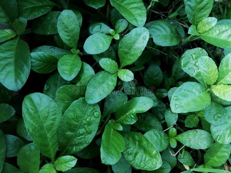 Växterna är ljusa - gräsplan och rundat fotografering för bildbyråer