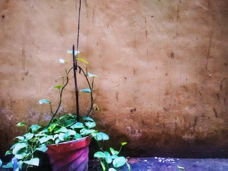 Växtförälskelse royaltyfri fotografi