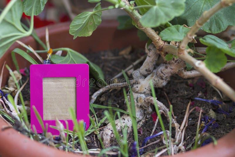 Växtfilnamn arkivbilder