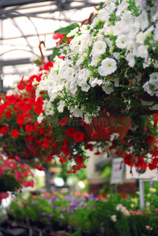 växthus royaltyfria foton