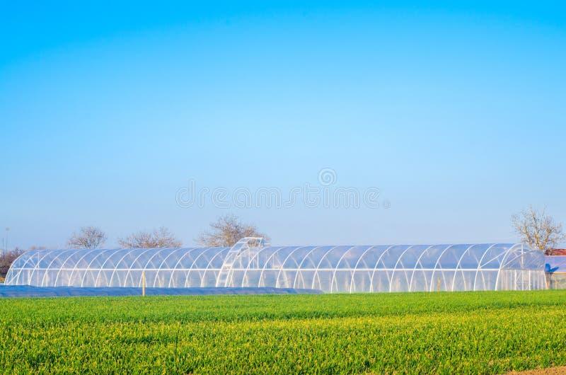 Växthus i fältet för plantor av skördar, frukter, grönsaker som lånar till bönder, jordbruksmarker, jordbruk, landsbygder som är  royaltyfria foton