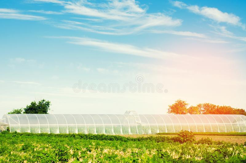 Växthus i fältet för plantor av skördar, frukter, grönsaker som lånar till bönder, jordbruksmarker, jordbruk, landsbygder som är  arkivfoto