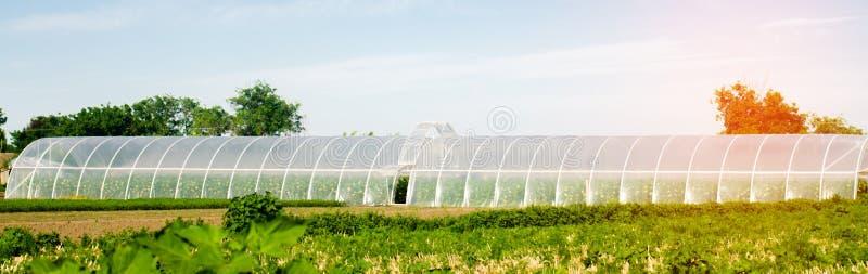Växthus i fältet för plantor av skördar, frukter, grönsaker som lånar till bönder, jordbruksmarker, jordbruk, landsbygder som är  royaltyfri fotografi
