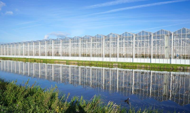 Växthus i Nederländerna royaltyfri bild