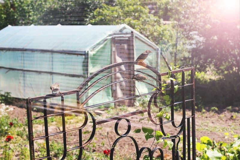 Växthus i trädgården Trädgård nära huset royaltyfri fotografi