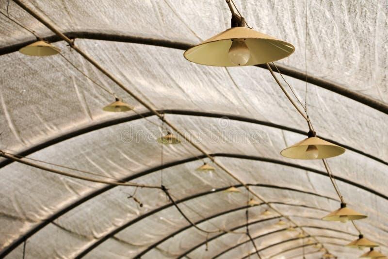 Växthus med att tända lampor och ljusa kulor ovanför takbråckbandet för industriellt växa av jordgubben Lampan hänger på fotografering för bildbyråer