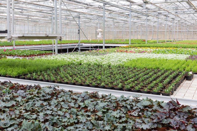 Växthuset med odling av flera planterar och blommar arkivbilder