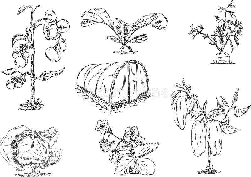 växthusgrönsaker stock illustrationer