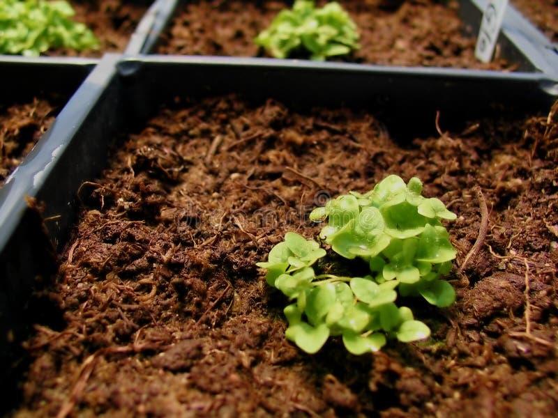 Växthusväxt Arkivfoton