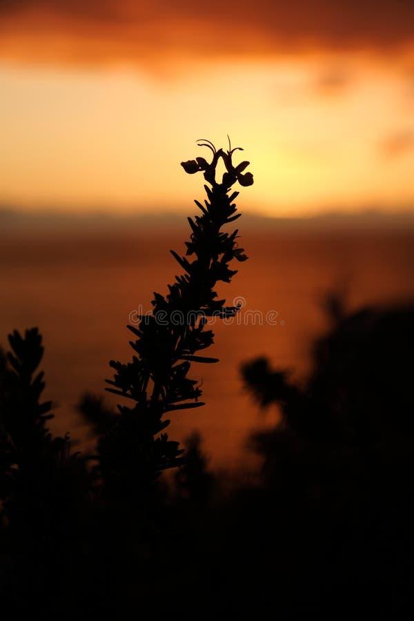 Växtkontur med suddig solnedgång arkivfoto