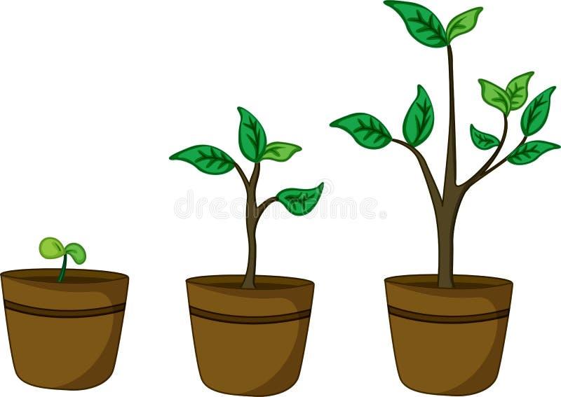 växtkruka stock illustrationer