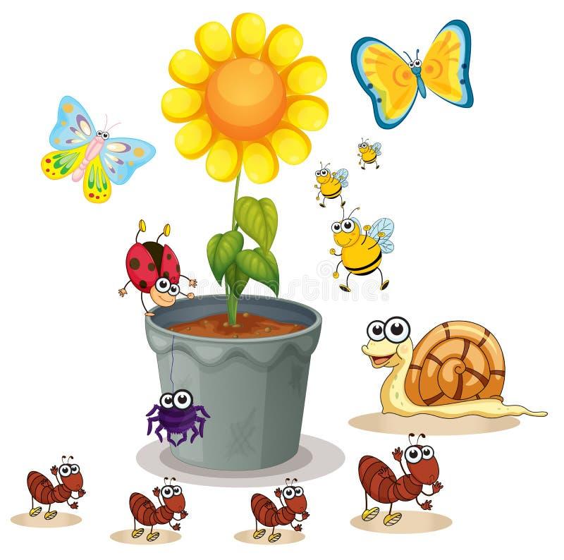 Växtkruka och kryp vektor illustrationer