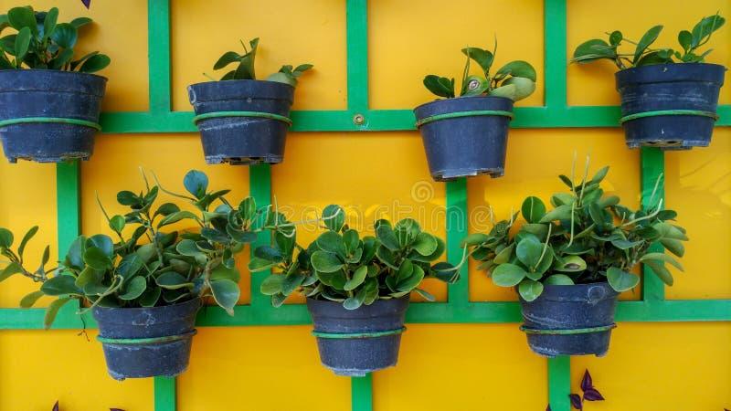 Växtkrukor som ordnas trevligt på väggen arkivfoton