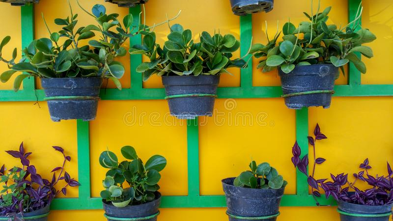 Växtkrukor som ordnas trevligt på väggen royaltyfri fotografi