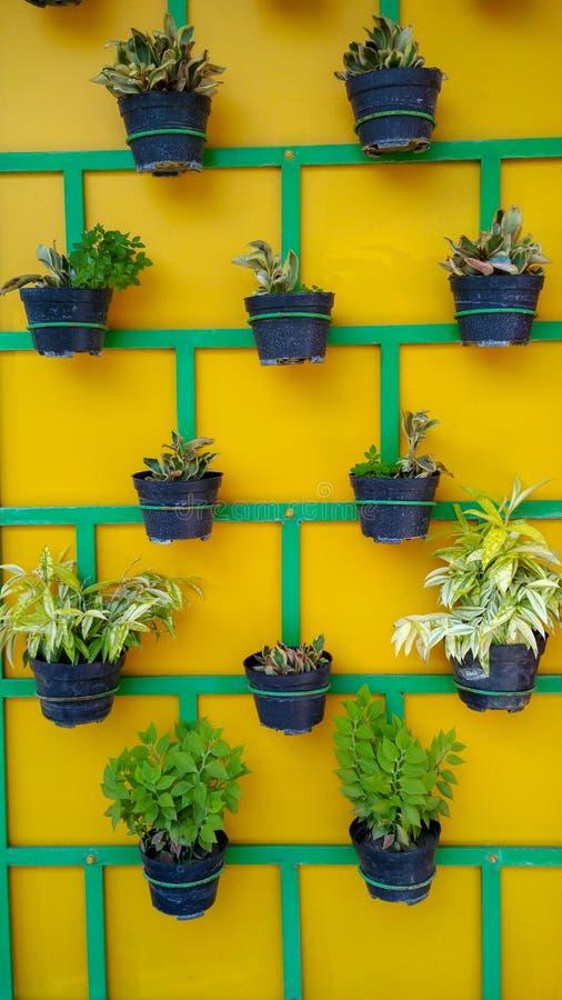 Växtkrukor som ordnas trevligt på väggen royaltyfri bild
