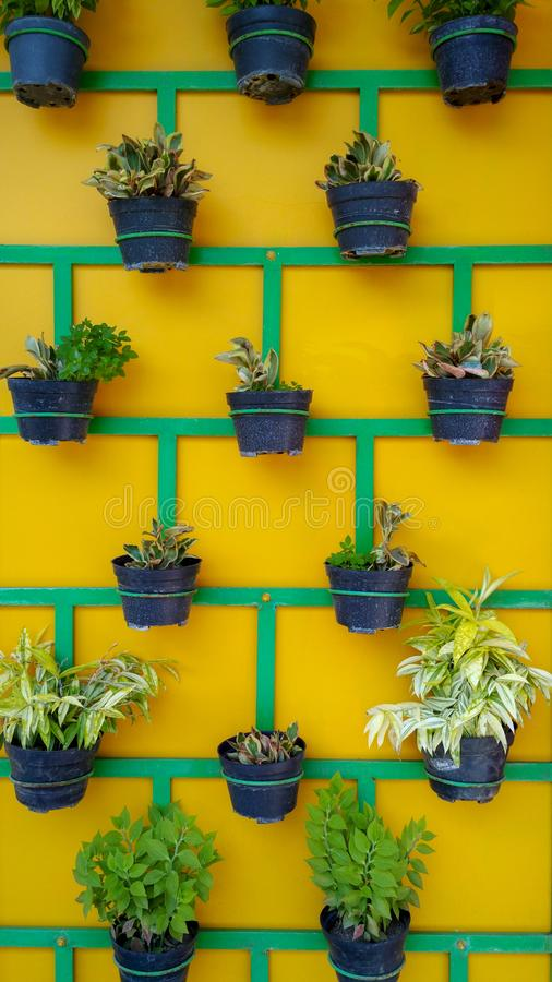 Växtkrukor som ordnas trevligt på väggen royaltyfria foton