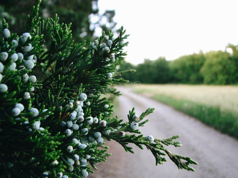 Växtmakrofotografi royaltyfri foto