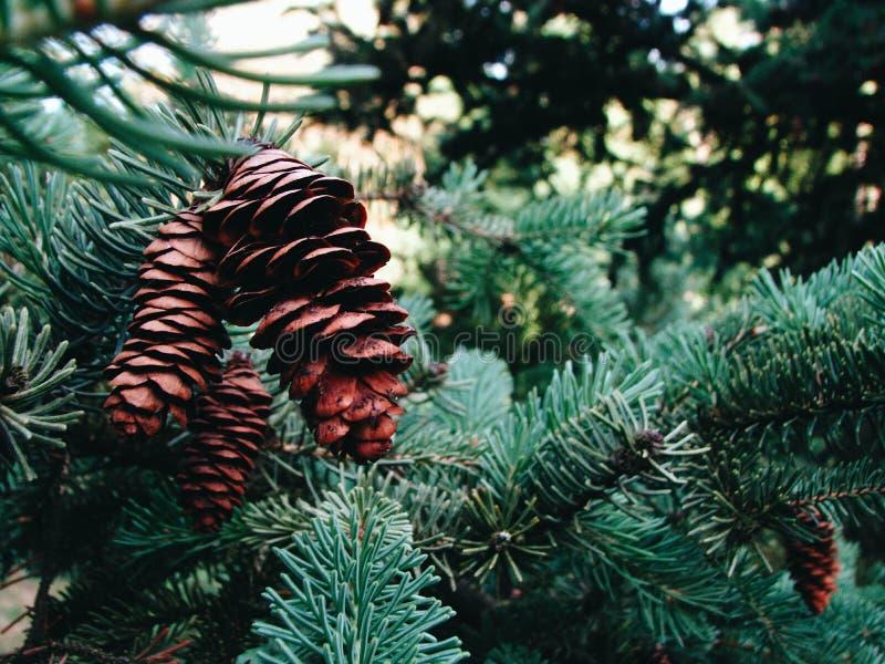 Växtmakrofotografi arkivfoton