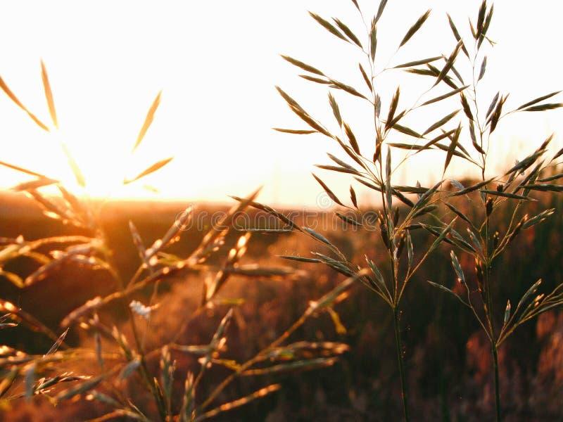 Växtmakrofotografi fotografering för bildbyråer